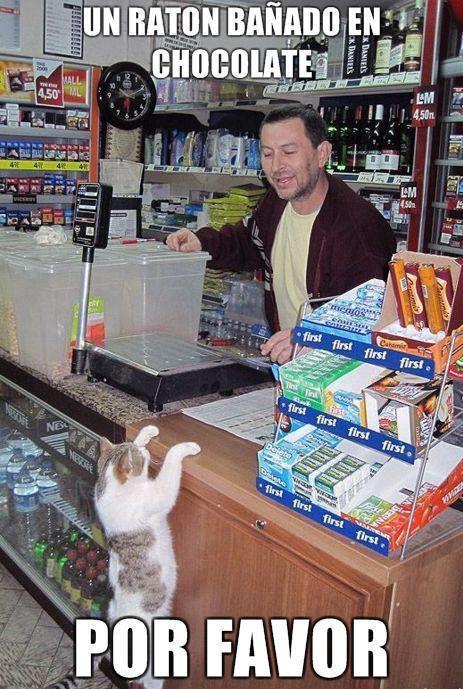 """Résultat de recherche d'images pour """"chat volant un gâteau"""""""